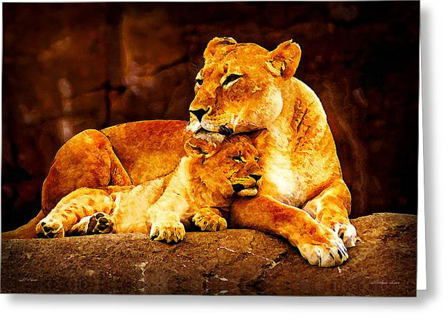 Lioness Greeting Cards - Mothers Love Greeting Card by Michael Stone