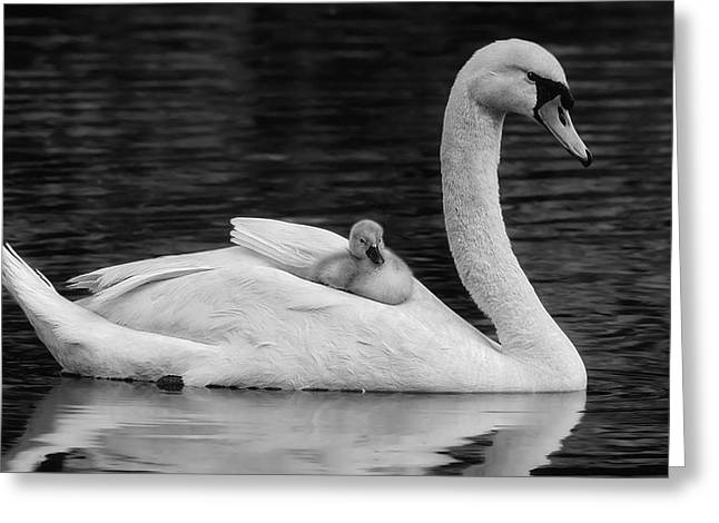 Mothers Precious Cargo Bw Greeting Card by Susan Candelario