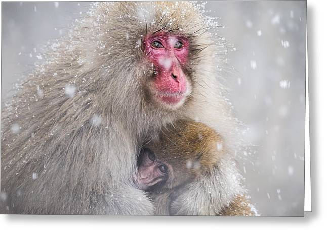 Apes Greeting Cards - Mothers Warmth Greeting Card by Takeshi Marumoto