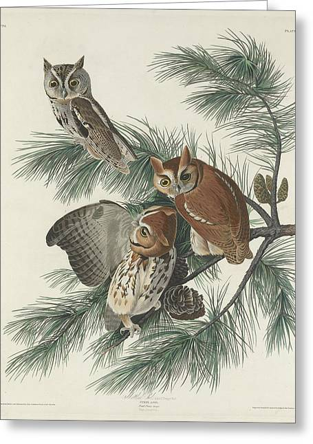 Mottled Owl Greeting Card by John James Audubon