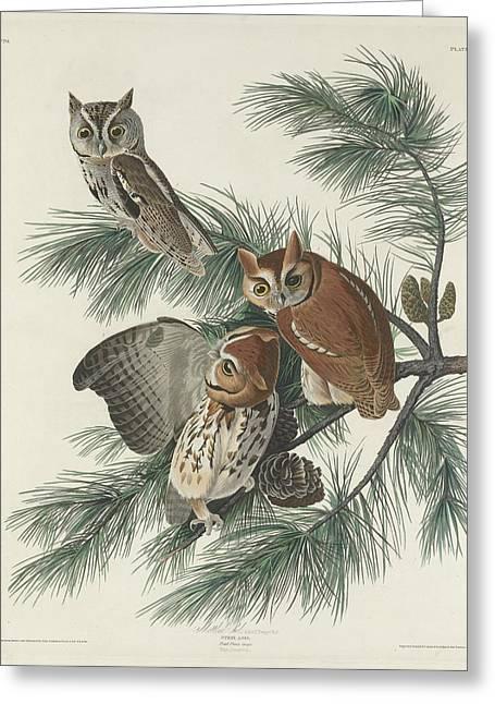 Mottled Greeting Cards - Mottled Owl Greeting Card by John James Audubon