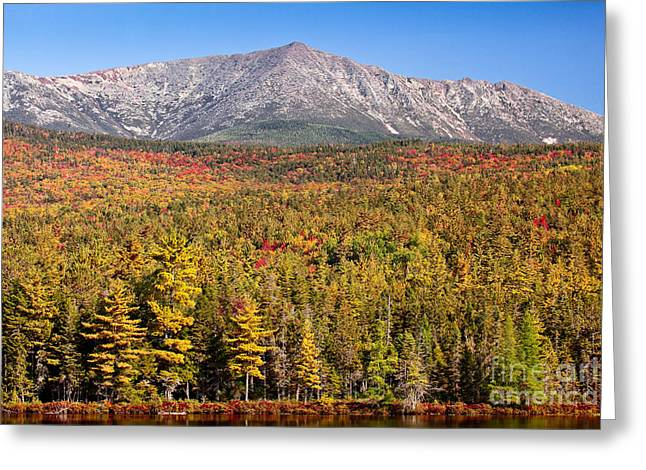 New England Wilderness Greeting Cards - Mount Katahdin in Gold Greeting Card by Susan Cole Kelly