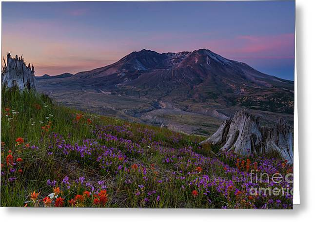 Northwest Greeting Cards - Mount St Helens Renewal Greeting Card by Mike Reid