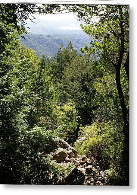 Recently Sold -  - Marin County Greeting Cards - Mount Tamalpais Forest View Greeting Card by Ben Upham