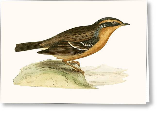 Mountain Accentor, Greeting Card by English School