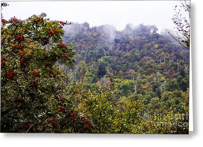 Fall Trees Greeting Cards - Mountain Ash on a Misty Mountain Greeting Card by Allen Nice-Webb