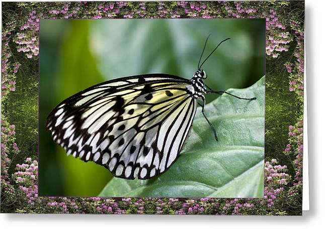 Mountain Butterfly Greeting Card by Bell And Todd
