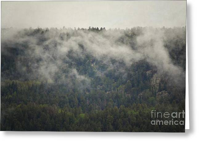 Jemez Mountains Greeting Cards - Mountain Fog Forest Greeting Card by Andrea Hazel Ihlefeld