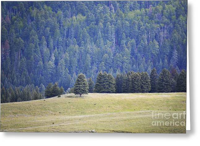 Jemez Mountains Greeting Cards - Mountain Forest Field Greeting Card by Andrea Hazel Ihlefeld