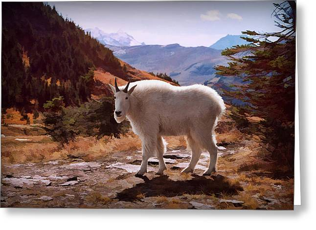 Mountain Goat Greeting Card by Patricia Montgomery