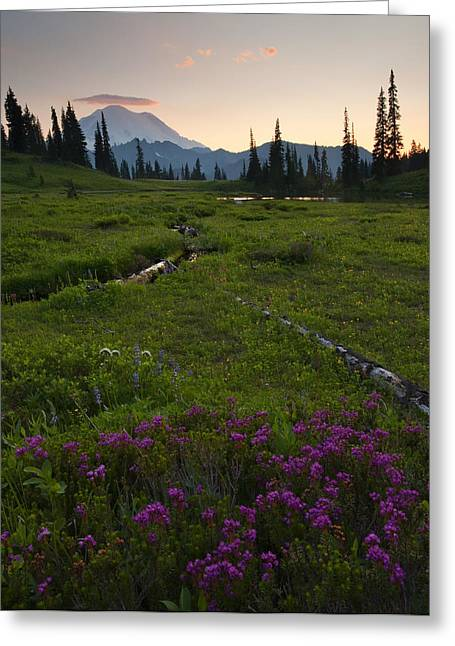 Mt Greeting Cards - Mountain Heather Sunset Greeting Card by Mike  Dawson