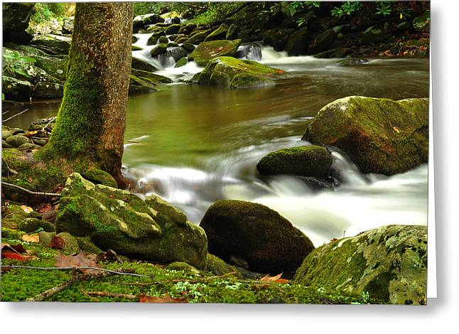 Great Smokey Mountains Greeting Cards - Mountain Stream 2 Greeting Card by William Jones