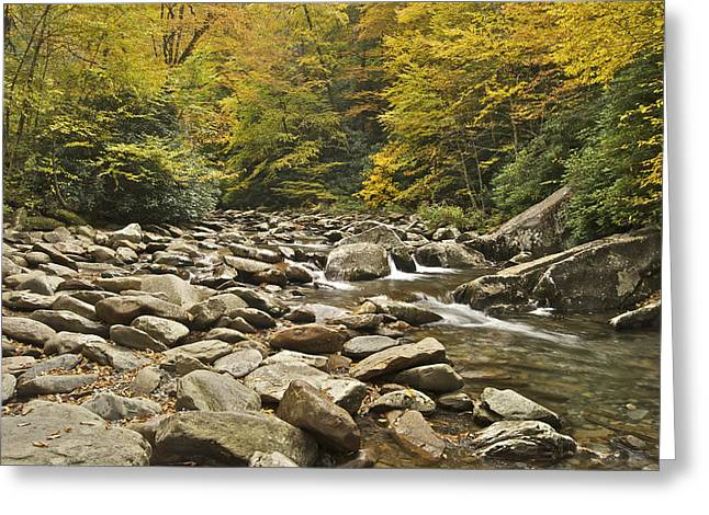 Gatlinburg Tennessee Greeting Cards - Mountain Stream  6058 Greeting Card by Michael Peychich