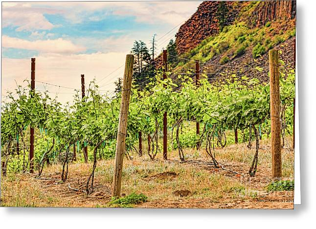 Blue Grapes Greeting Cards - Mountain Vineyard Greeting Card by Jean OKeeffe Macro Abundance Art