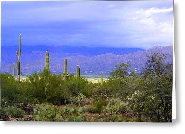 Mountains And Saguaros Greeting Card by Teresa Stallings