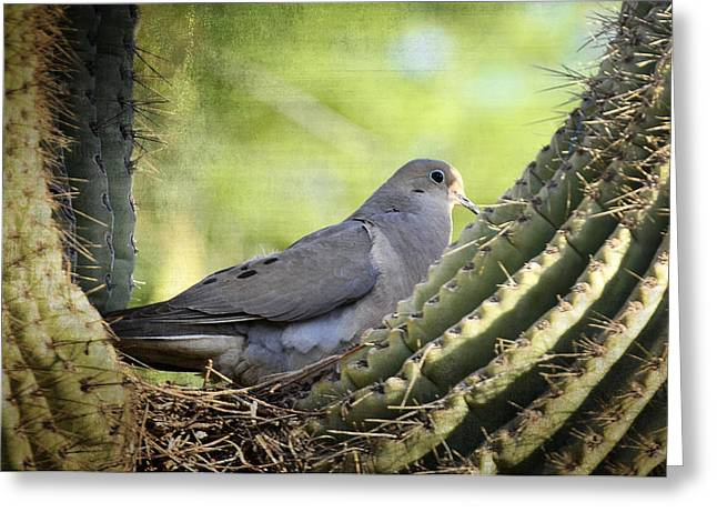 Mourning Dove Greeting Cards - Mourning Dove in the Morning  Greeting Card by Saija  Lehtonen