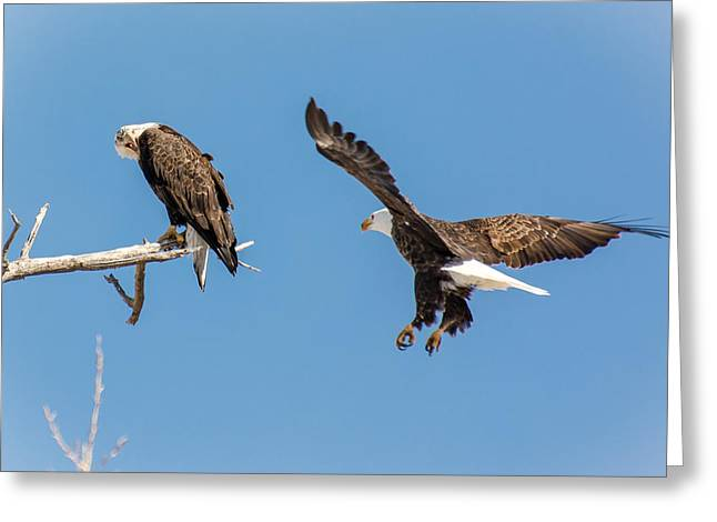 Pairs Greeting Cards - Move over, youre getting company Greeting Card by John Bartelt