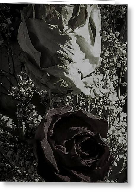 Sunlight On Flowers Digital Greeting Cards - Moving On Remnants of a Failed Love Greeting Card by Paul Shefferly
