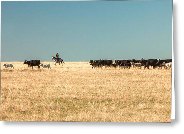 Moving The Herd Greeting Card by Todd Klassy