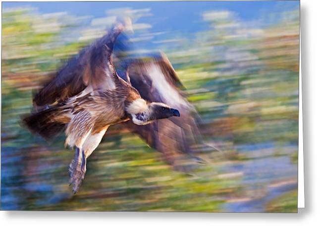 Fly In Greeting Cards - Moving Vulture Greeting Card by Basie Van Zyl