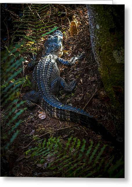 Mr Alley Gator Greeting Card by Marvin Spates