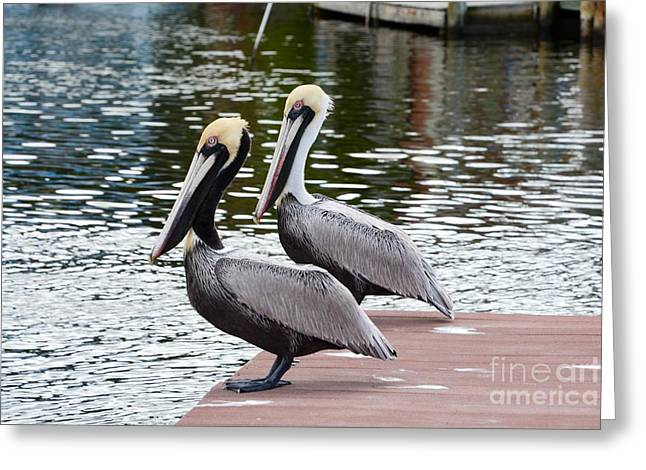 Sea Birds Greeting Cards - Mr. and Mrs. Greeting Card by Lisa Kilby