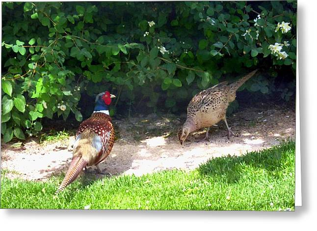 Mr And Mrs Pheasant Greeting Card by Will Borden