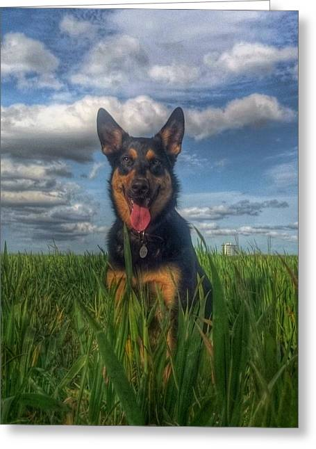 Gsd Greeting Cards - Mr Darcy Squared Greeting Card by I F Abbie Shores
