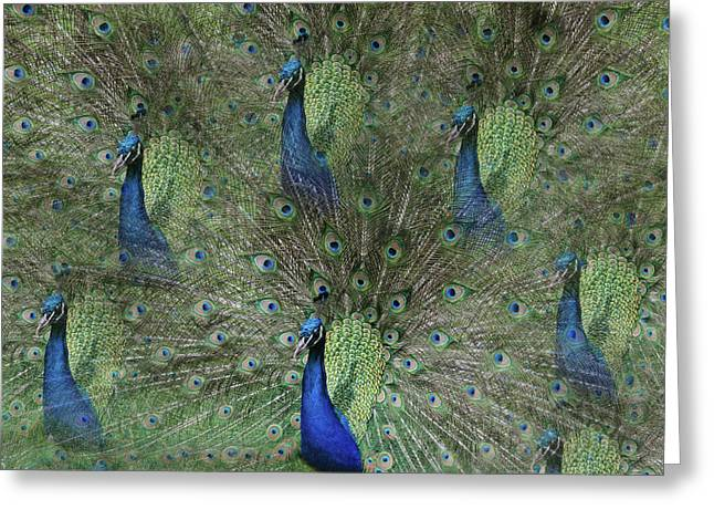 Mr Peacock Greeting Card by Cheryl Cencich