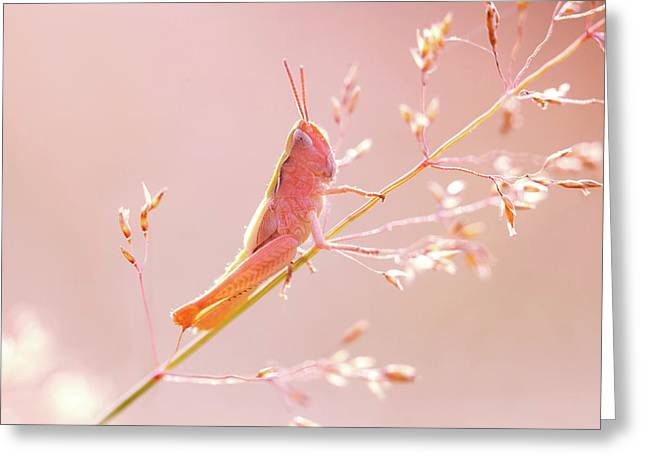 Mr Pink - Pink Grassshopper Greeting Card by Roeselien Raimond
