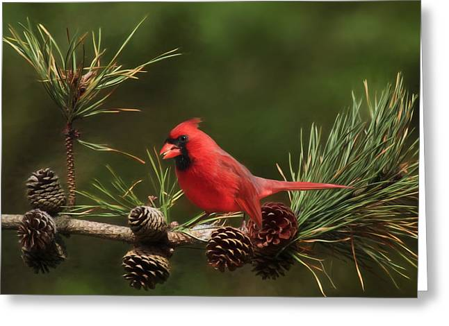 Mr. Red Greeting Card by Lori Deiter