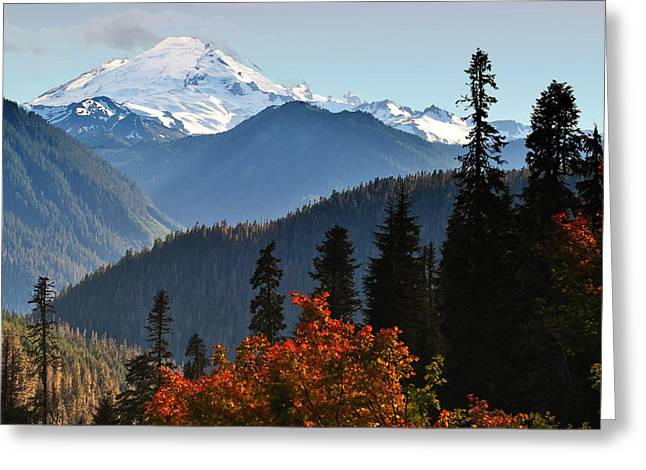 Aster Greeting Cards - Mt Baker from the Yellow Aster Trail Greeting Card by Alvin Kroon