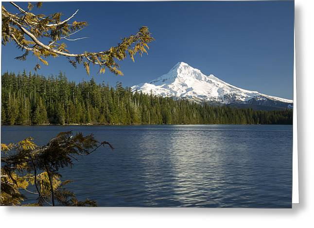 Fir Trees Greeting Cards - Mt Hood from Lost Lake Greeting Card by Brian Jannsen