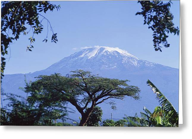 Snow Capped Greeting Cards - Mt. Kilimanjaro,moshi,tanzania Greeting Card by David Constantine