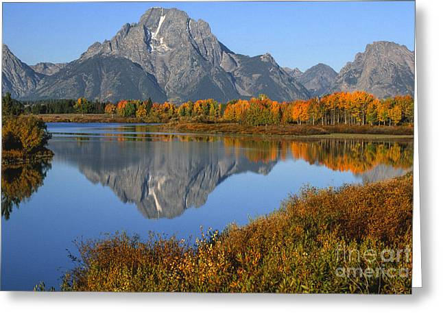 Mt. Moran Fall Reflection  Greeting Card by Sandra Bronstein
