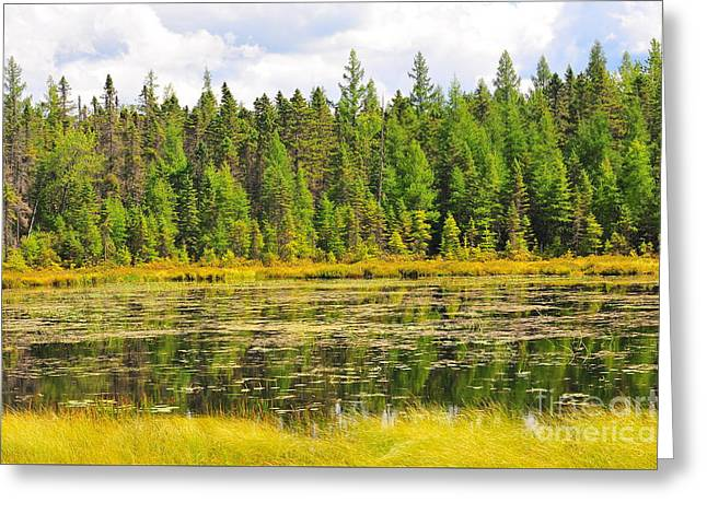 Mud Pond Greeting Card by Catherine Reusch  Daley