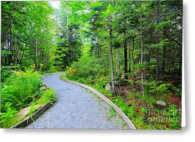 Mud Pond Trail  Greeting Card by Catherine Reusch  Daley