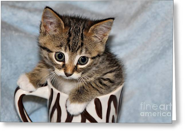 Mug Kitten Greeting Card by Teresa Zieba