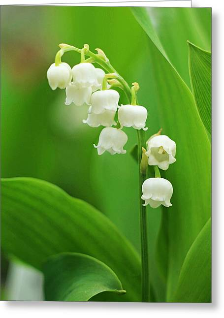 Tears Greeting Cards - Muguet Melody Greeting Card by Iryna Burkova