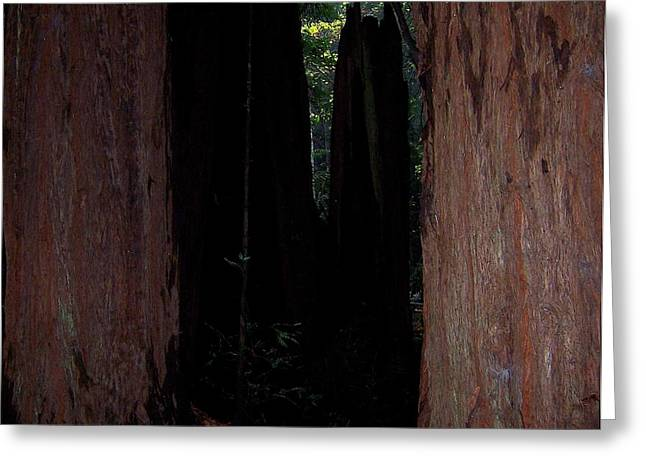 Forest Pyrography Greeting Cards - Muir woods-5 Greeting Card by Antoaneta Melnikova- Hillman