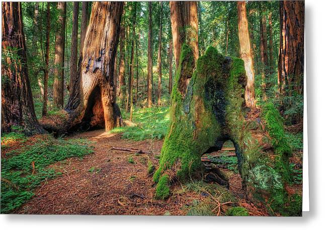 Marin County Greeting Cards - Muir Woods National Monument  Greeting Card by Jennifer Rondinelli Reilly