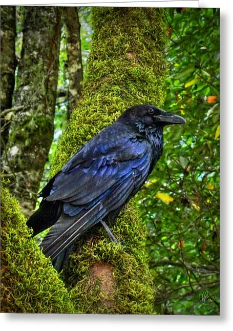 Corvus Greeting Cards - Muir Woods Raven 001 Greeting Card by Lance Vaughn
