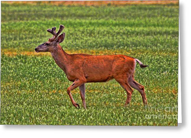 Sante Fe Trail Greeting Cards - Mule Deer on the Sante Fe Trail Greeting Card by Tommy Anderson