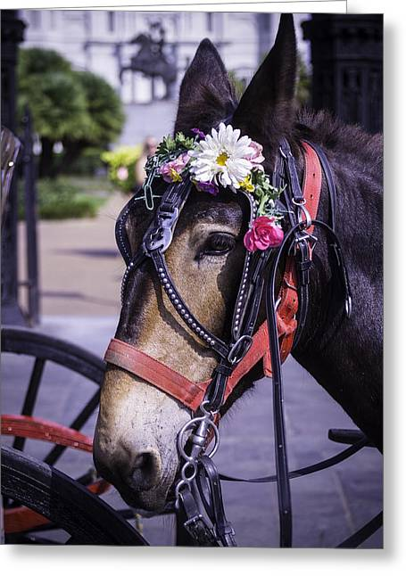 Mules Greeting Cards - Mule portrait Greeting Card by Garry Gay