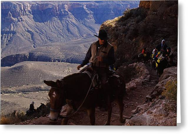 Mule Riders And Hikers On The Trail Greeting Card by Panoramic Images