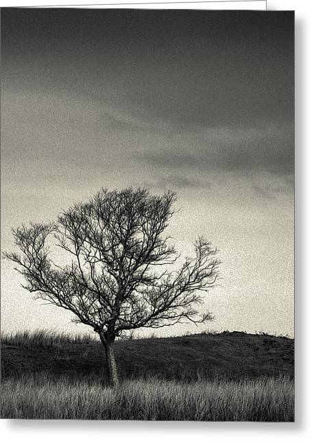 Mull Tree Greeting Card by Dave Bowman