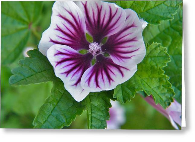 Mullen Greeting Cards - Mullen Plant Bloom   Indiana  Summer Greeting Card by Rory Cubel