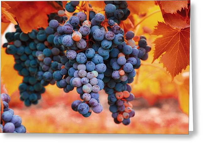 Fruit And Wine Greeting Cards - Multicolored grapes Greeting Card by Lynn Hopwood