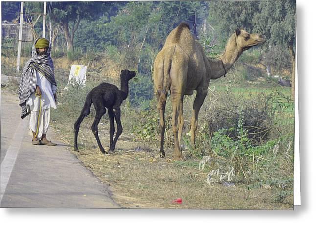 Camel Digital Greeting Cards - Mum and Baby Camel Greeting Card by Vijay Sharon Govender