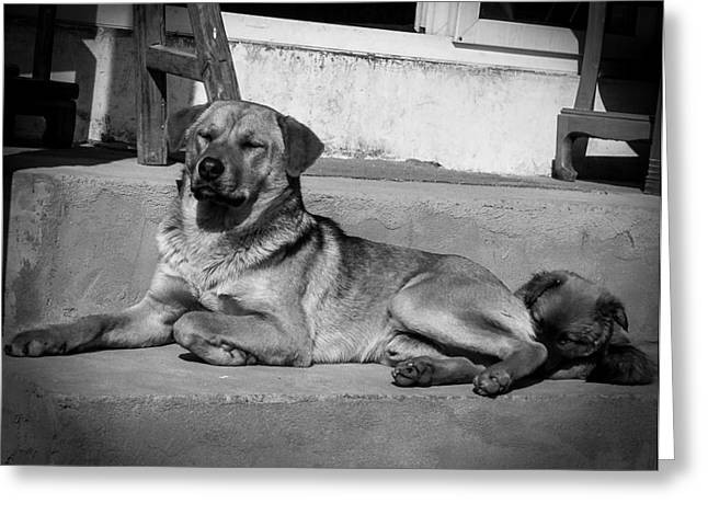 Puppies Photographs Greeting Cards - Mum and Pup Greeting Card by Nicholas Kan